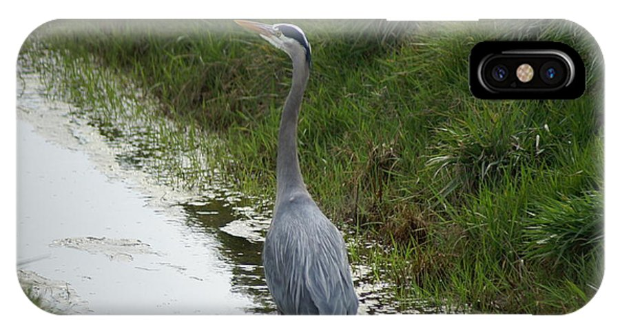 Heron IPhone X / XS Case featuring the photograph Blue Heron by Louise Magno