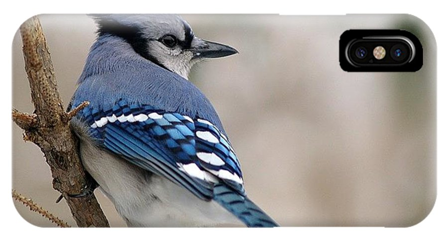 Blue Jay IPhone X Case featuring the photograph Blue Jay by Gaby Swanson