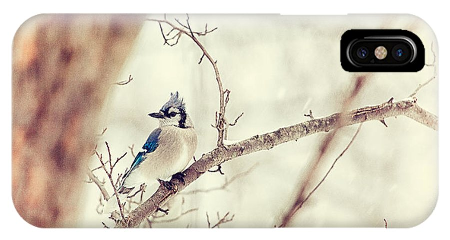 Blue Jay IPhone X Case featuring the photograph Blue Jay Winter by Karol Livote