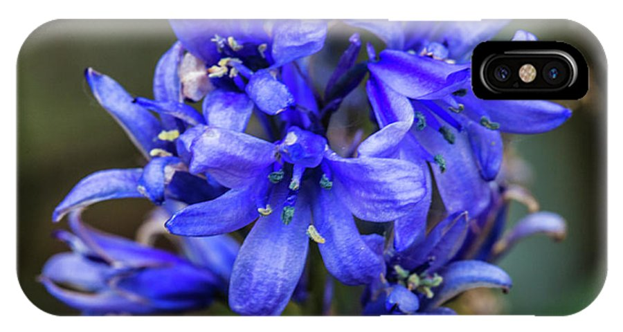 Pretty Flower Pictures IPhone X Case featuring the photograph Bluebells by Ed James