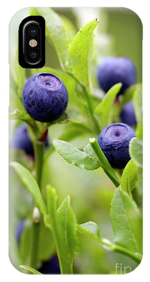 Blueberry IPhone X Case featuring the photograph Blueberry Shrubs by Michal Boubin