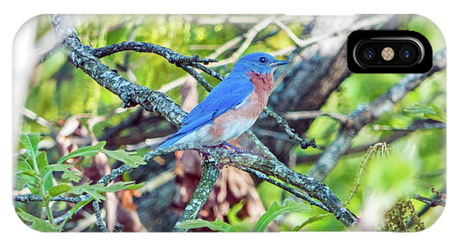 Bluebird IPhone X Case featuring the photograph Bluebird by Dragonfleyes Photography and Creations
