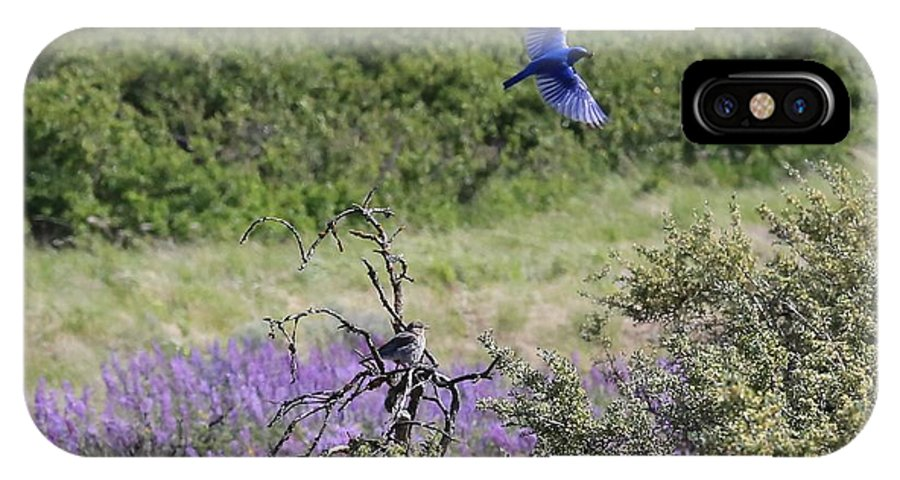 Bluebird IPhone X Case featuring the photograph Bluebird Pair In Blickleton by Carol Groenen
