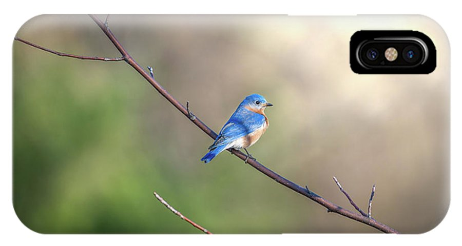 Bluebird IPhone X Case featuring the photograph Bluebird Perched On A Tree Branch In The Sunlight by Patrick Wolf