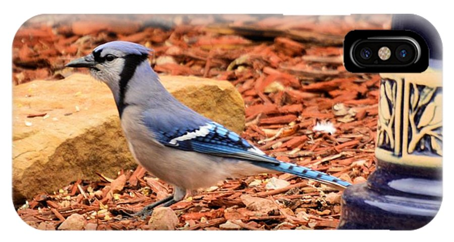 Bird IPhone X Case featuring the photograph Bluejay Profile by Wendy Fox