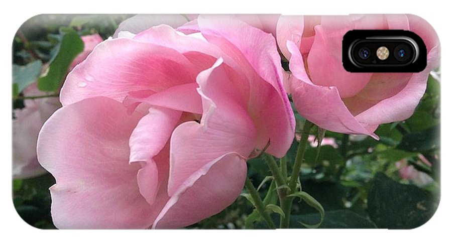 Roses IPhone X Case featuring the photograph Blush by Gina Sullivan
