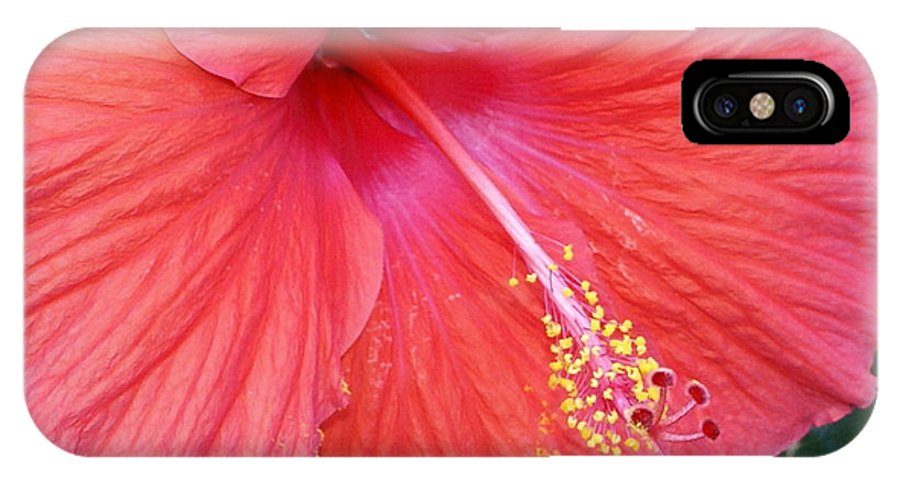 Flowers IPhone X Case featuring the photograph Blushing Stamen by Debbie May