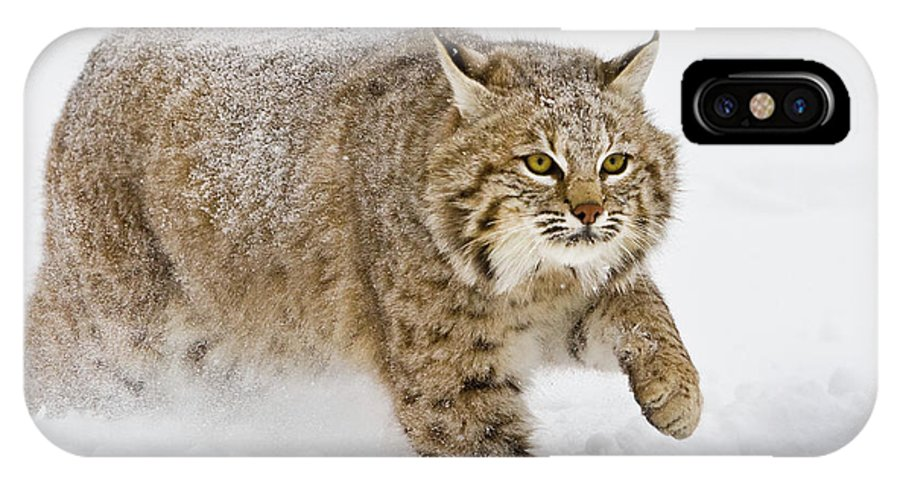 Bobcat IPhone X Case featuring the photograph Bobcat In Snow by Jerry Fornarotto