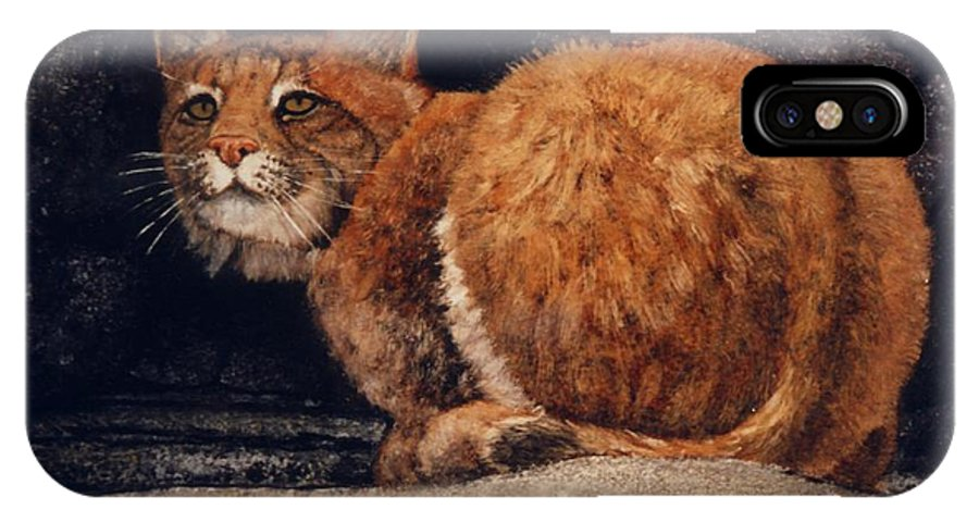 Wildlife IPhone Case featuring the painting Bobcat On Ledge by Frank Wilson