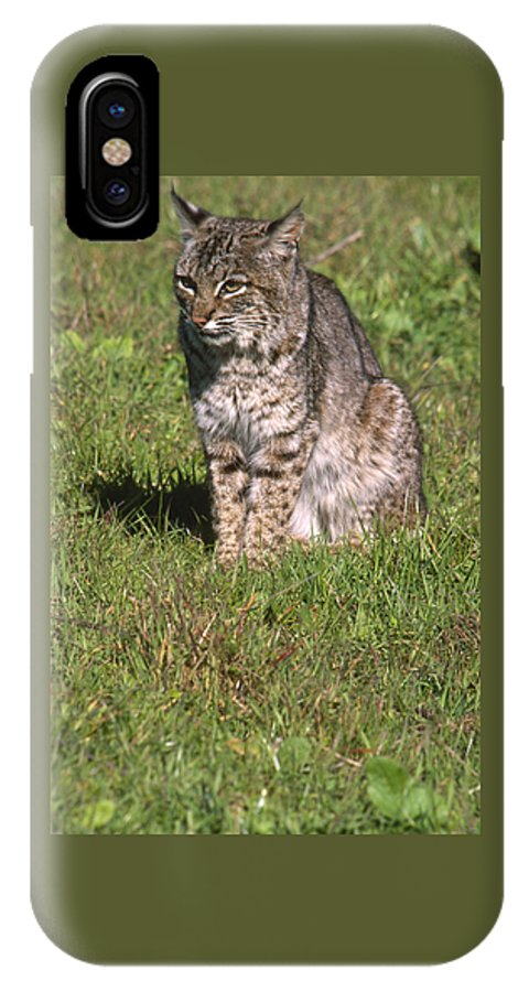 Bobcat IPhone X Case featuring the photograph Bobcat - Wildcat Beach by Soli Deo Gloria Wilderness And Wildlife Photography