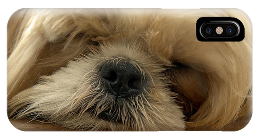 Dog IPhone X Case featuring the photograph Bogie Asleep by Kathi Shotwell