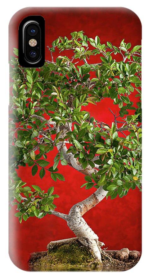 Asian IPhone X Case featuring the photograph Bonsai Tree by Antonio Gravante