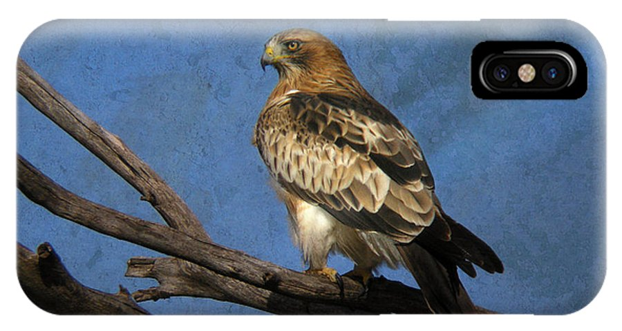 Booted Eagle IPhone X Case featuring the photograph Booted Eagle by Perry Van Munster