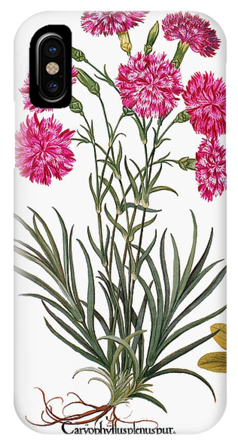 1613 IPhone X Case featuring the photograph Botany: Flowers, 1613 by Granger