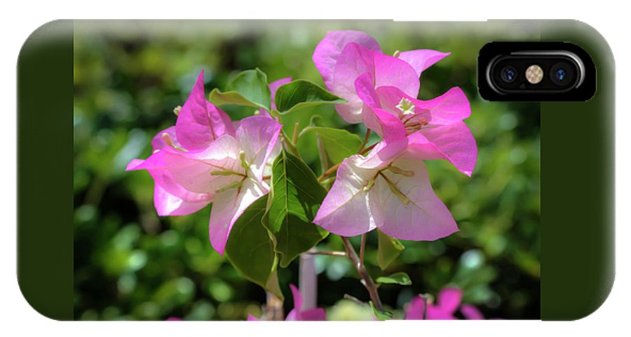 Bougainvillea IPhone X / XS Case featuring the photograph Bougainvillea by Soroush Mostafanejad
