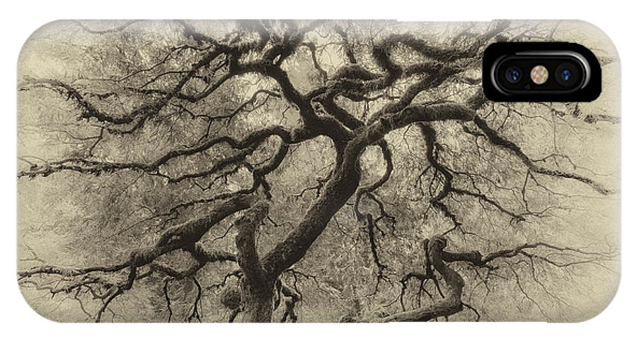Portland IPhone X / XS Case featuring the photograph Branching Out In Autumn Antique by David Gn