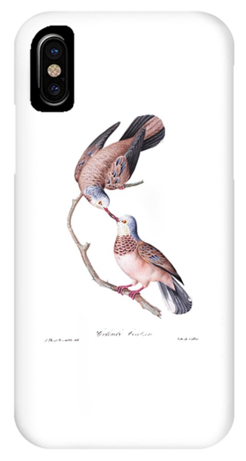 Brazilian IPhone X Case featuring the painting Brazilian Birds by Philip Ralley