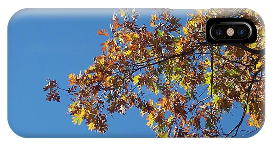 Branch IPhone Case featuring the photograph Bright Autumn Branch by Michelle Miron-Rebbe
