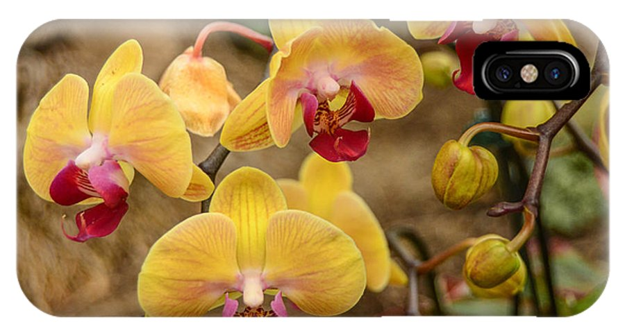 Orchids IPhone X Case featuring the photograph Bright Bunch by Robert Coffey