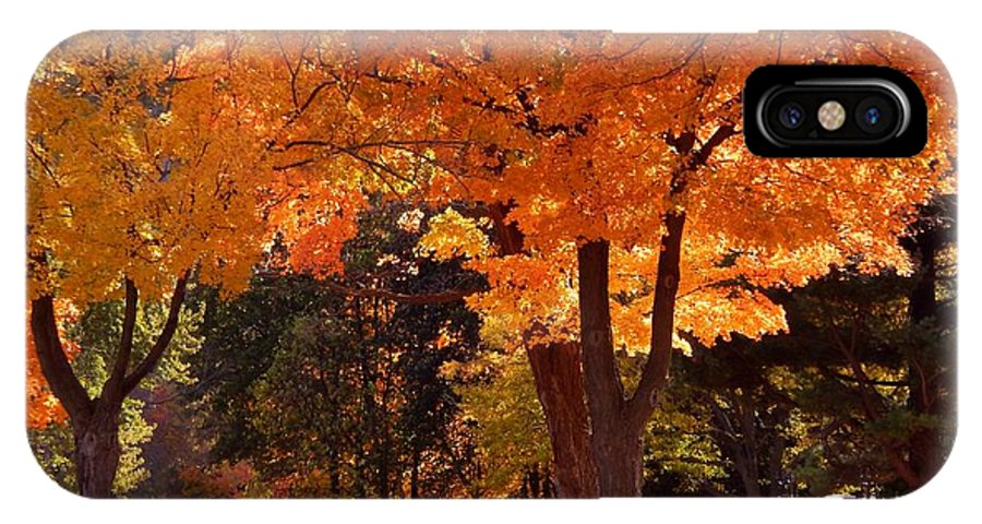 Autumn IPhone X Case featuring the photograph Bright Maple Morning by Wild Thing