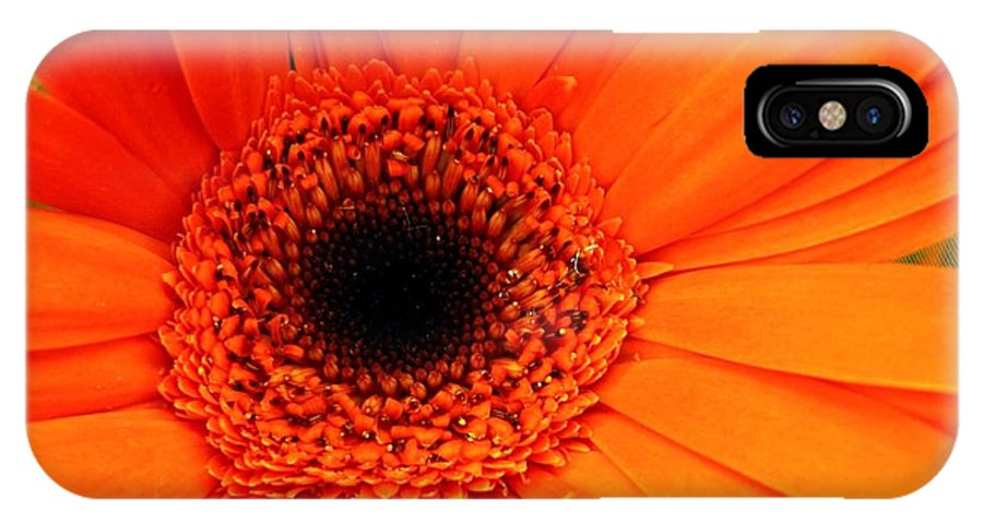 Flower IPhone Case featuring the photograph Bright Red by Rhonda Barrett