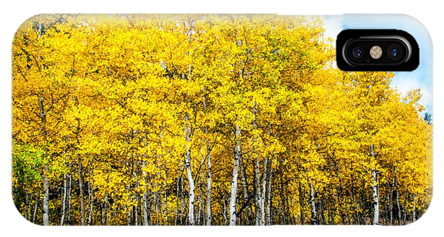 Aspen IPhone X Case featuring the photograph Brilliant Aspens by William Krumpelman