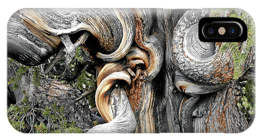 Bristlecone Pine - 'i Am Not Part Of History - History Is Part Of Me'  IPhone X Case