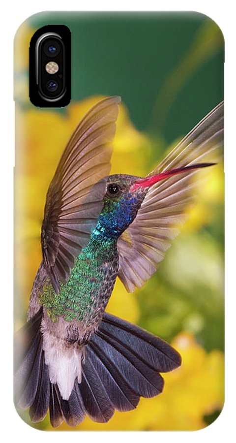 Hummingbird IPhone X Case featuring the photograph Broad-bill Pose by Janet Fikar