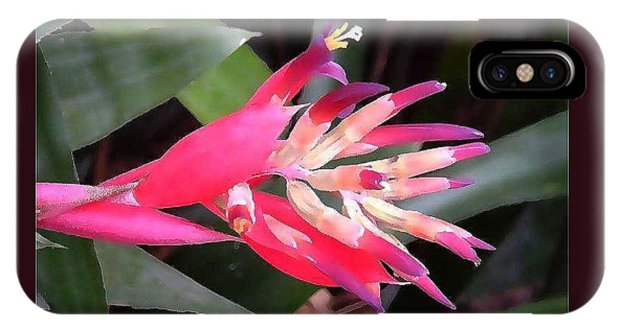 Bromeliad Blossom IPhone X Case featuring the painting Bromeliad by Fred Jinkins