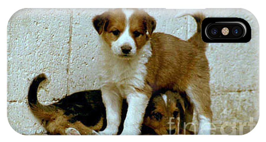 Puppies IPhone X Case featuring the photograph Brothers by Kathy McClure
