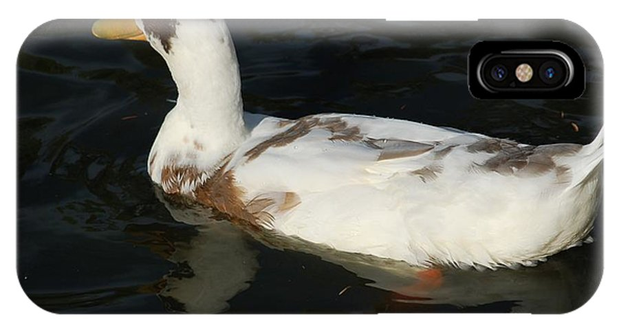 Bird IPhone X Case featuring the photograph Brown and White Duck by D Nigon