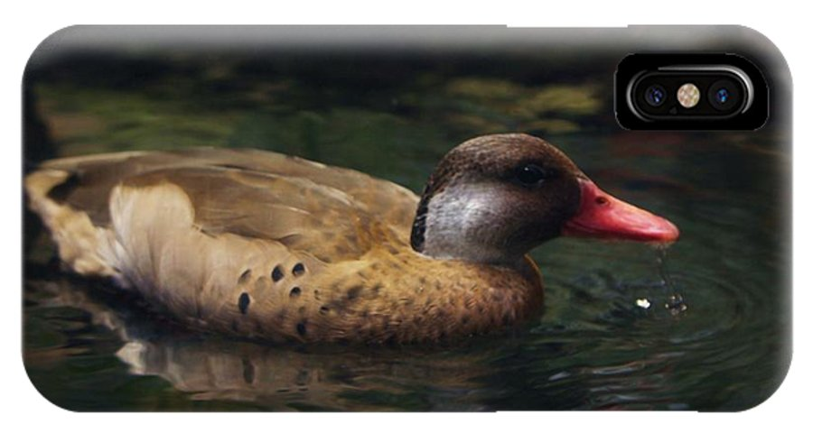 Duck IPhone Case featuring the photograph Brown Duck by Kenna Westerman