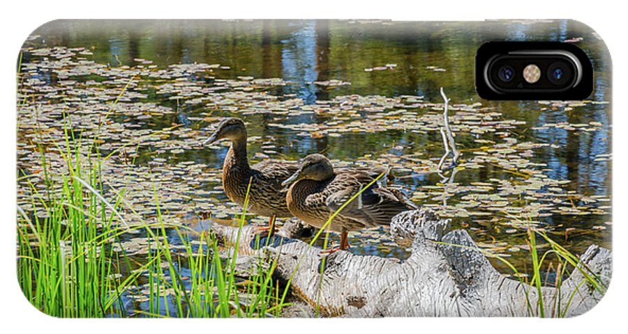 Landscape IPhone X Case featuring the photograph Brown Ducks On Log by Javier Flores