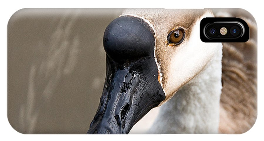 Chinese Brown Goose IPhone X Case featuring the photograph Brown Eye by Christopher Holmes
