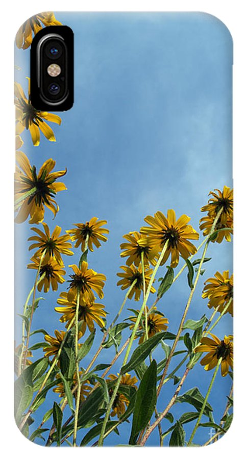 Wildflowers IPhone X Case featuring the photograph Brown-eyed Susans From Below by Anna Lisa Yoder