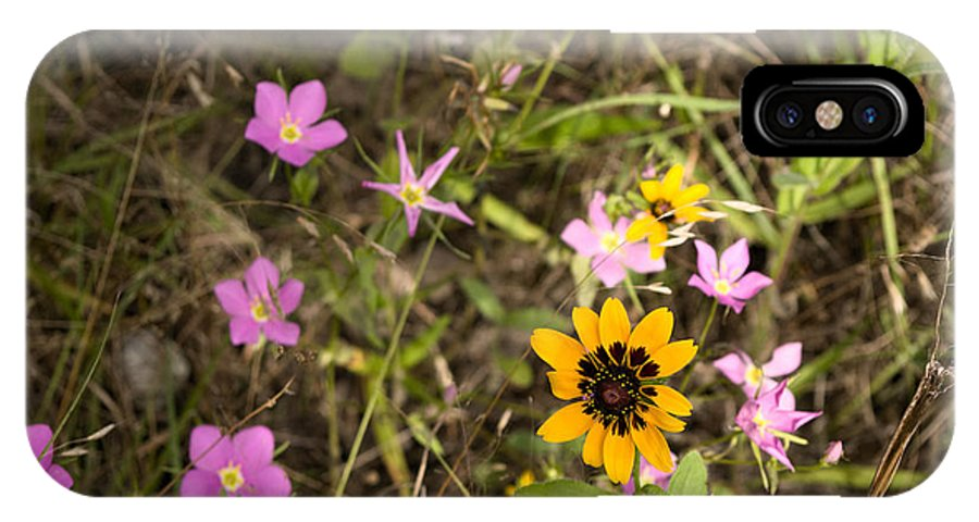Sabatia Angularis IPhone X Case featuring the photograph Brown Eyed Susans With Rose Gentian Flowers by Jeanette Fiveash