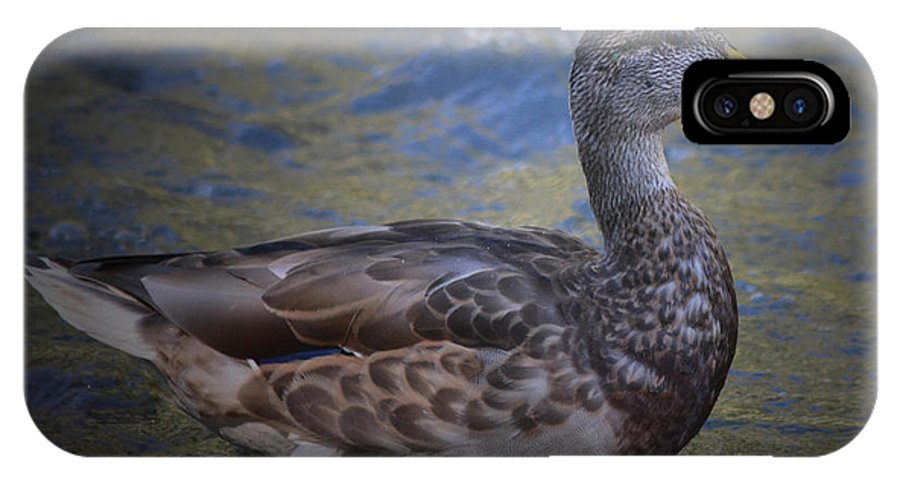 Mallard IPhone X / XS Case featuring the photograph Brown Feathered Girl by Richard Andrews
