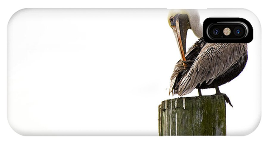 Bird IPhone X Case featuring the photograph Brown Pelican On Piling by Bob Decker