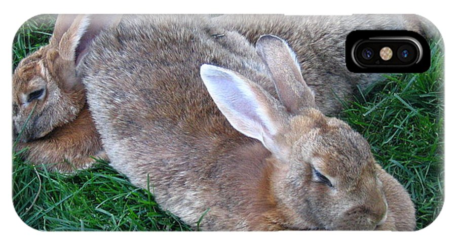 Rabbit IPhone X Case featuring the photograph Brown Rabbits by Devorah Shoshanna
