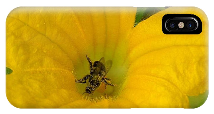 Bee Photography IPhone X Case featuring the photograph Brunch by Evelyn Patrick