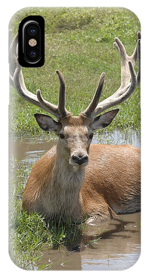 Buck IPhone X Case featuring the photograph Buck by Keith Lovejoy