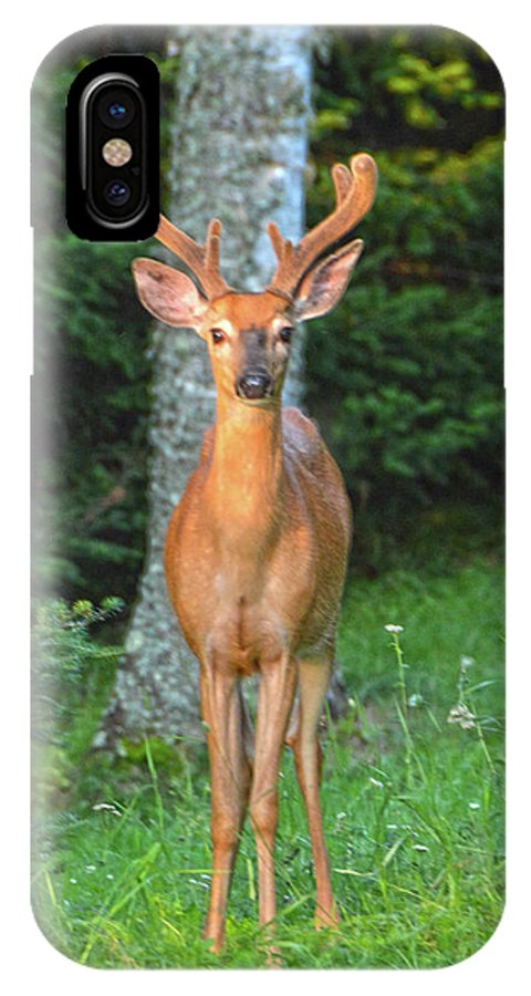 Buck IPhone X Case featuring the photograph Buck Standing Tall by Christine Dekkers