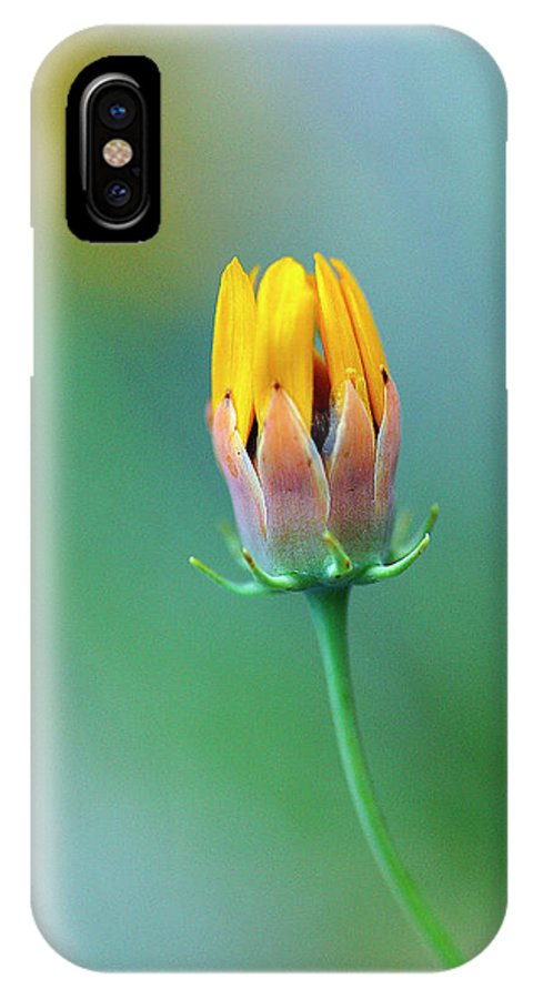 Wildflower IPhone X Case featuring the photograph Bud by Bill Morgenstern