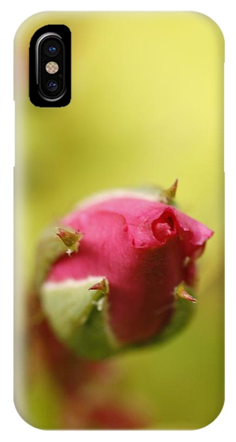 Flower IPhone X Case featuring the photograph Buddy by Martina Fagan