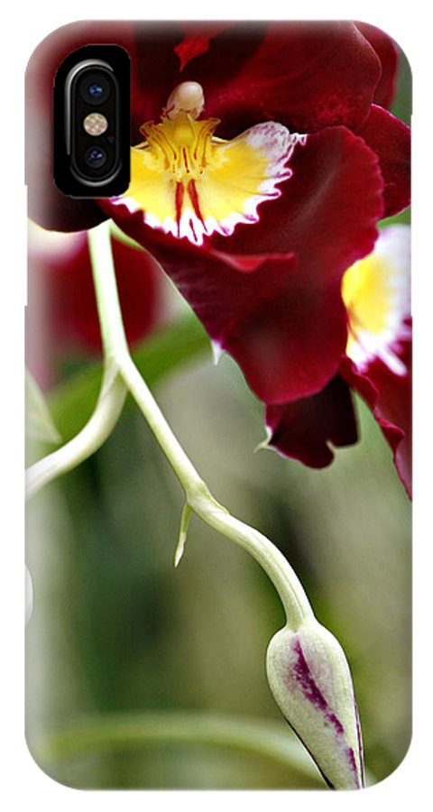 Orchid IPhone X Case featuring the photograph Buds And Blooms Orchid by Marilyn Hunt