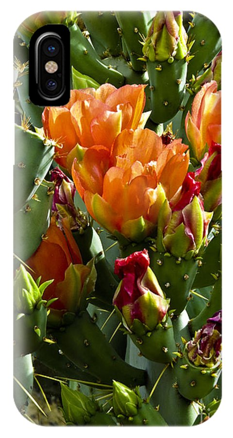 Arizona IPhone X Case featuring the photograph Buds N Blossoms by Kathy McClure
