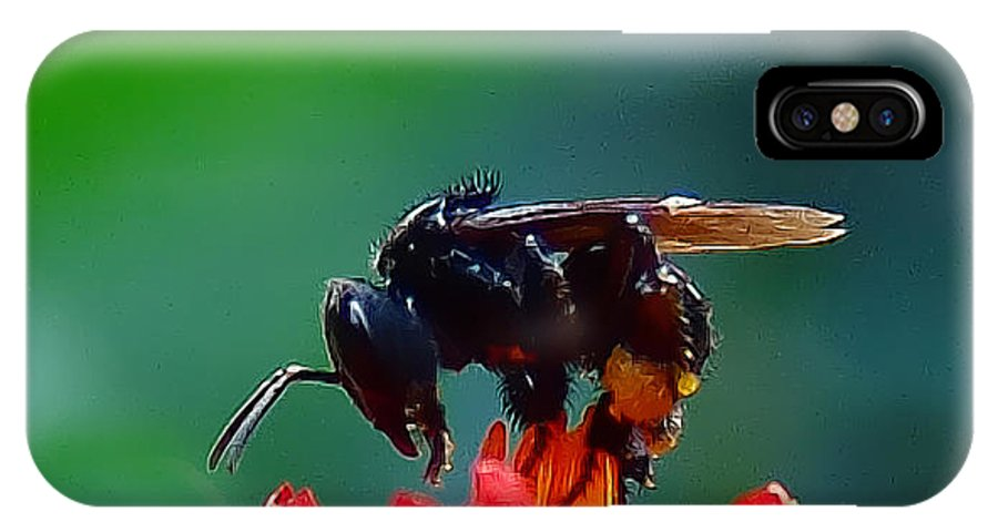 Insect IPhone X Case featuring the photograph Bug by Galeria Trompiz