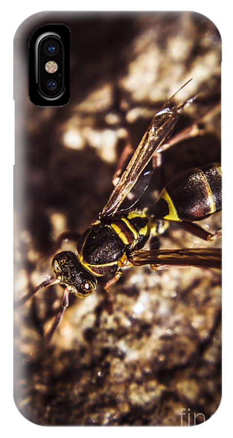 Insects IPhone X / XS Case featuring the photograph Bugs Life by Jorgo Photography - Wall Art Gallery