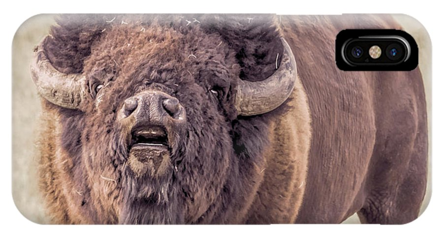 Bison IPhone X Case featuring the photograph Bull Bison by Cindi Alvarado