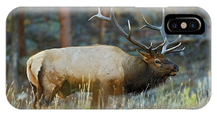 Bull Elk IPhone X Case featuring the photograph Bull Elk 6x6 by Gary Langley